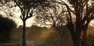 Rural road in Africa